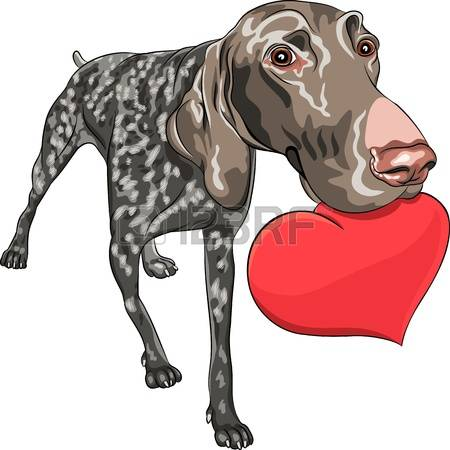 German Shorthaired Pointer clipart #11, Download drawings