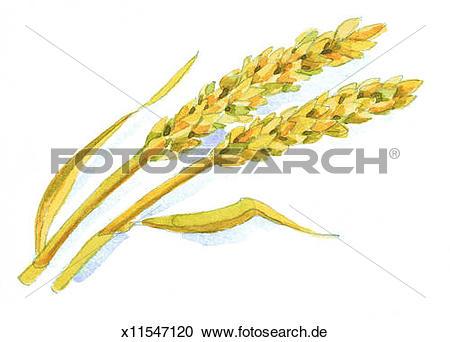 Getreide clipart #6, Download drawings