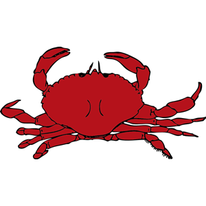 Ghost Crab clipart #9, Download drawings