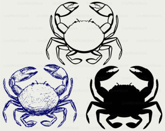 Ghost Crab svg #10, Download drawings