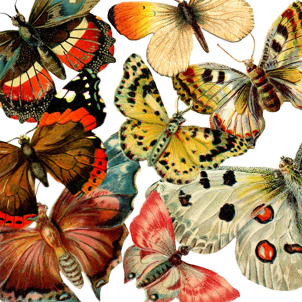 Ghost Moth clipart #12, Download drawings