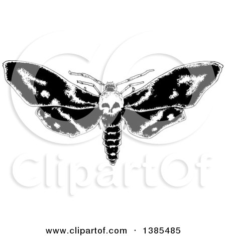 Ghost Moth clipart #7, Download drawings