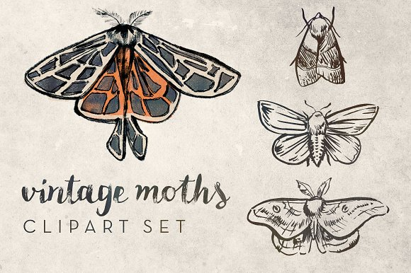 Ghost Moth clipart #8, Download drawings
