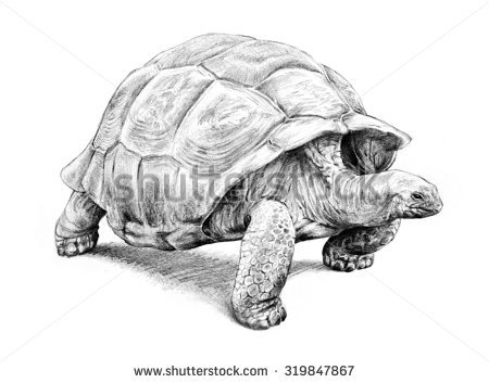 Giant Tortoise clipart #12, Download drawings