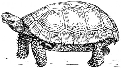 Giant Tortoise clipart #5, Download drawings