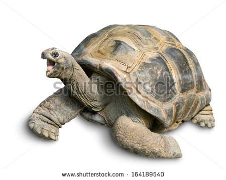 Giant Tortoise clipart #8, Download drawings
