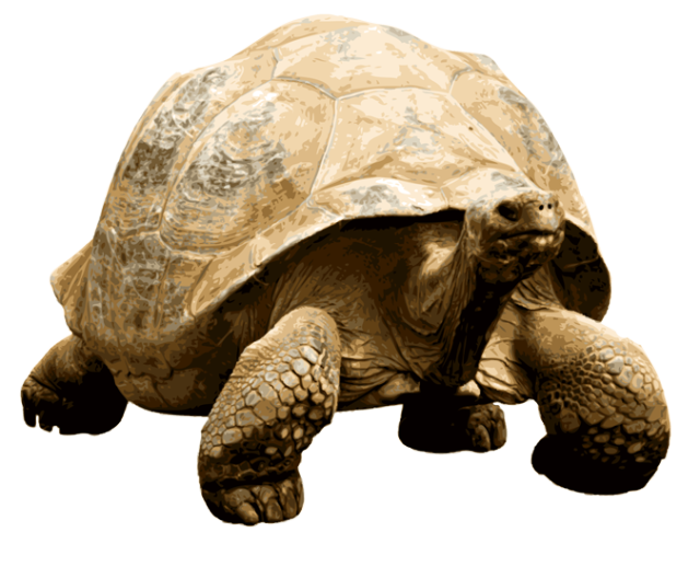 Giant Tortoise clipart #19, Download drawings