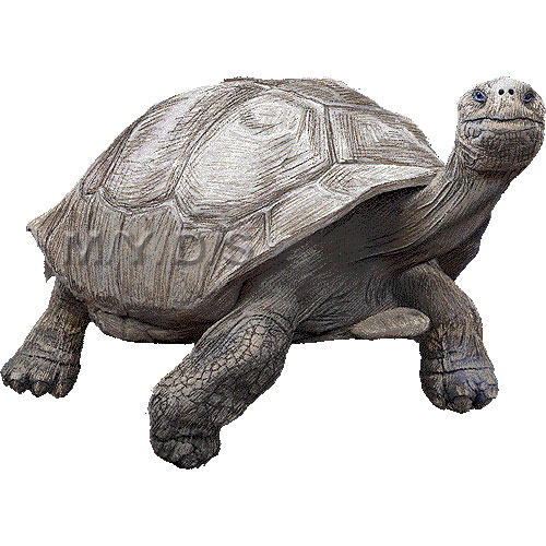 Giant Tortoise clipart #18, Download drawings