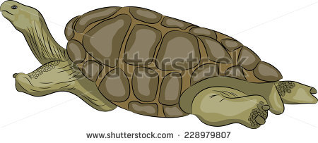 Giant Tortoise clipart #2, Download drawings