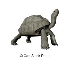 Giant Tortoise clipart #15, Download drawings