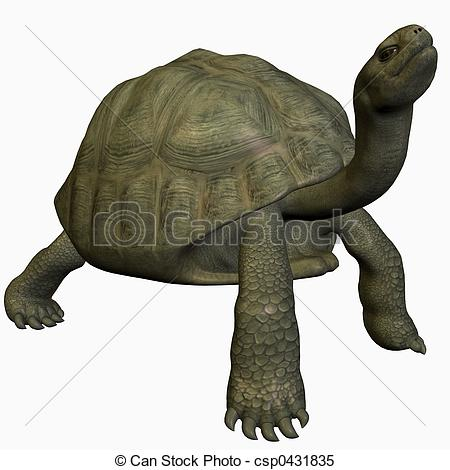 Giant Tortoise clipart #10, Download drawings