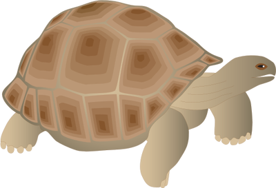 Tortoise svg #18, Download drawings