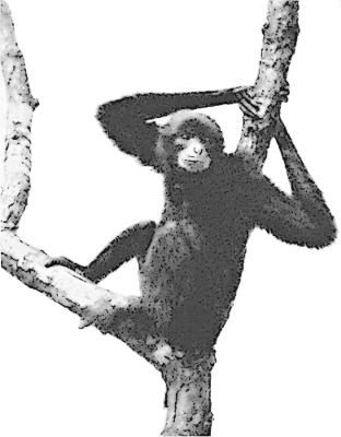 Gibbon clipart #14, Download drawings