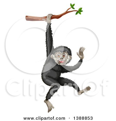 Gibbon clipart #8, Download drawings
