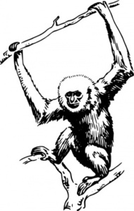 Gibbon clipart #2, Download drawings