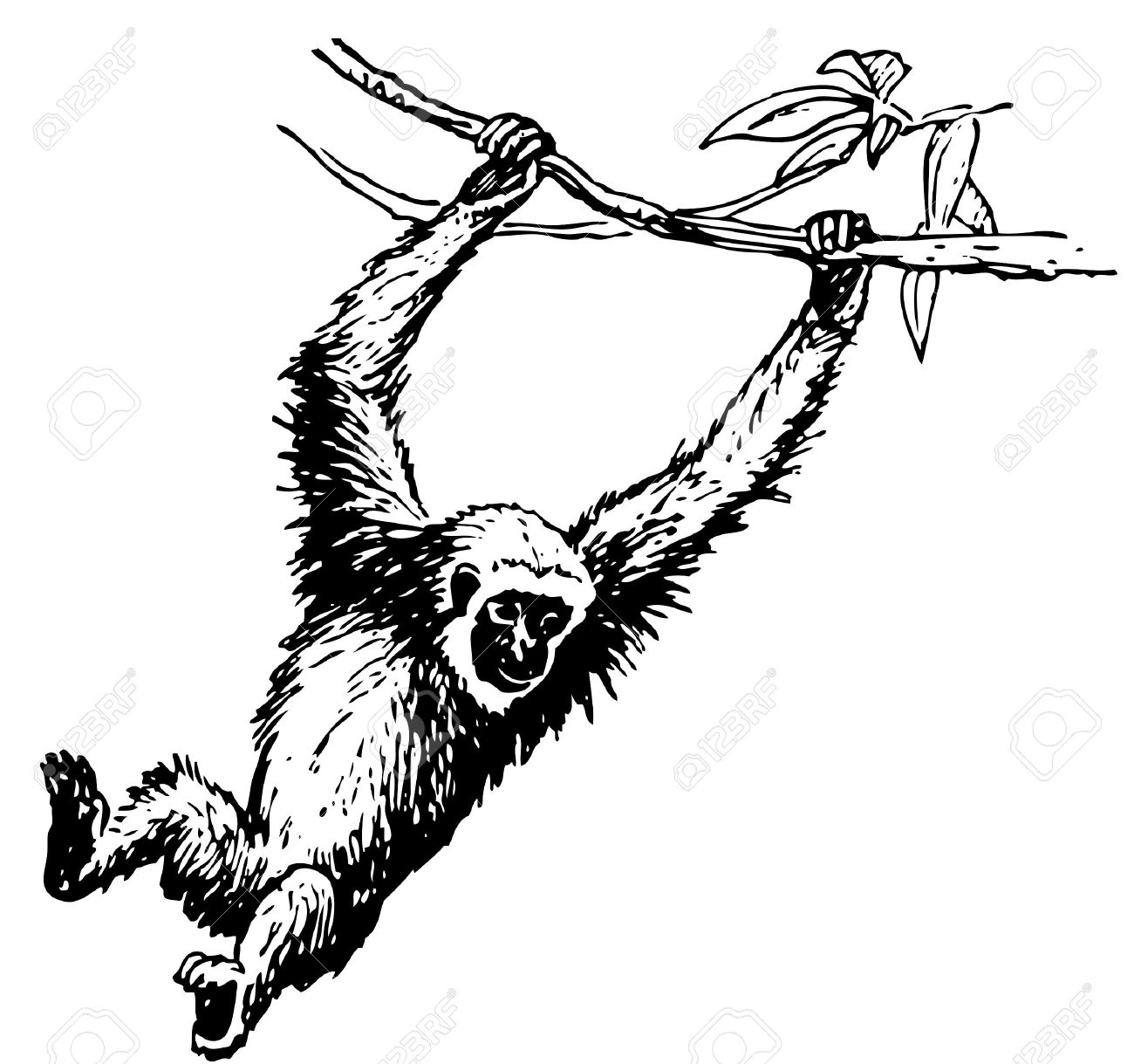 Gibbon clipart #3, Download drawings