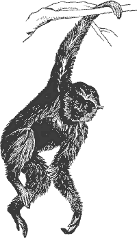 Gibbon clipart #17, Download drawings