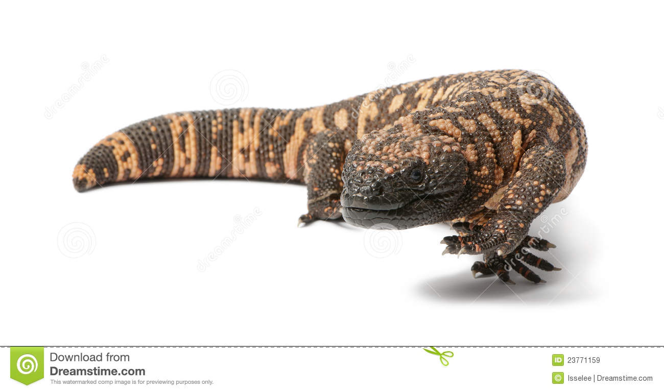 Gila Monster clipart #12, Download drawings