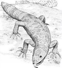 Gila Monster clipart #10, Download drawings