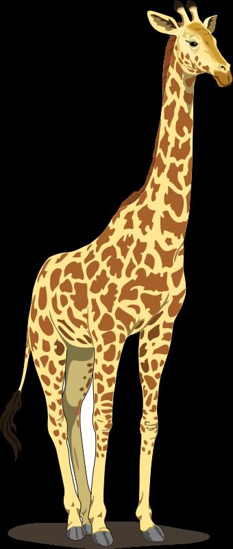 Giraffe clipart #16, Download drawings