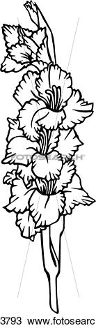 Gladiolus clipart #17, Download drawings