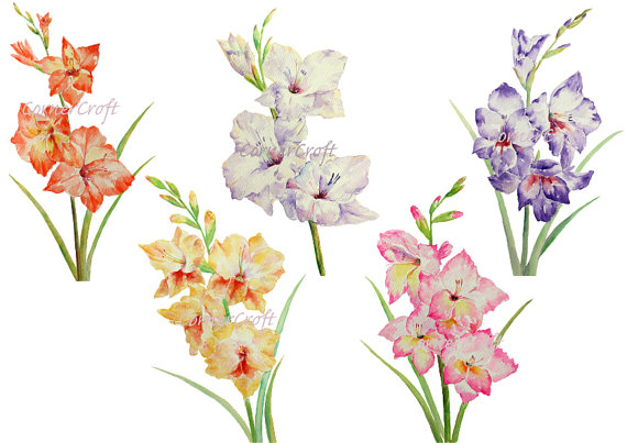 Gladiolus clipart #2, Download drawings
