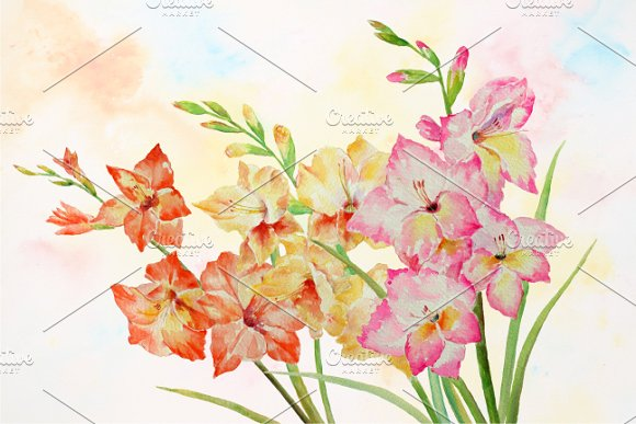 Gladiolus clipart #3, Download drawings