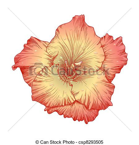Gladiolus clipart #5, Download drawings