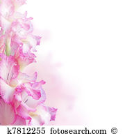 Gladiolus clipart #10, Download drawings