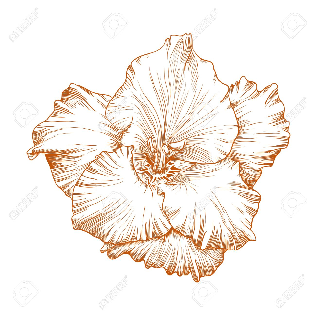 Gladiolus clipart #4, Download drawings