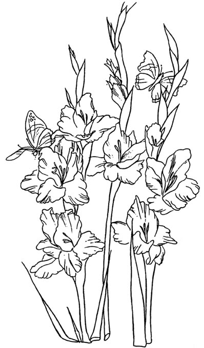 Gladiolus clipart #18, Download drawings