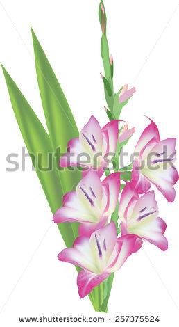 Gladiolus svg #1, Download drawings