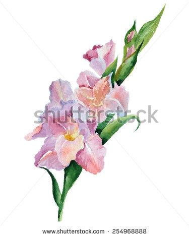Gladiolus svg #6, Download drawings