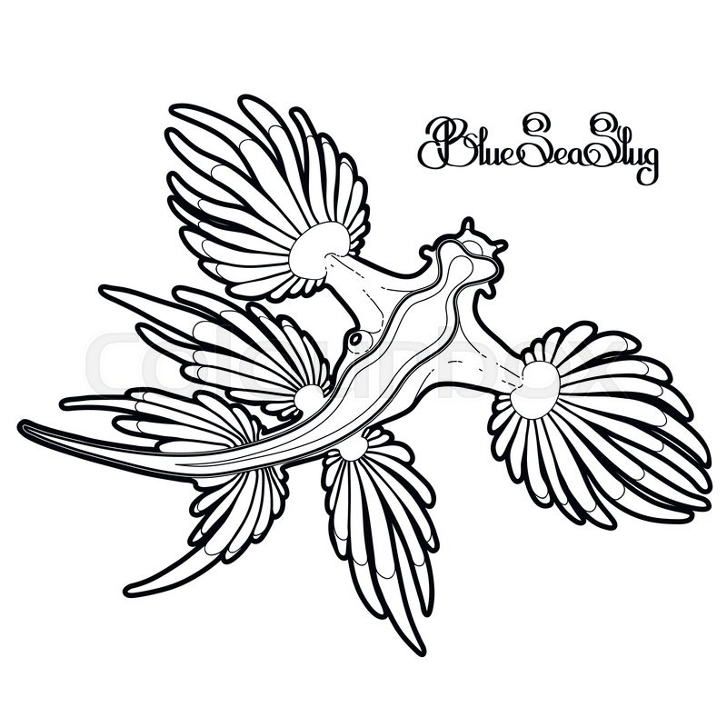 Glaucus Atlanticus coloring #4, Download drawings