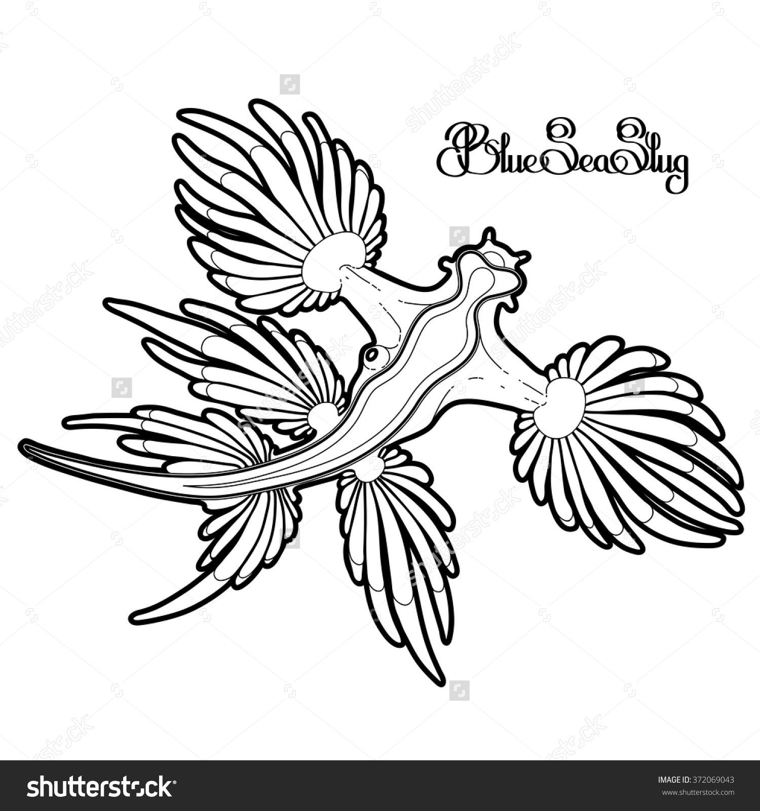 Glaucus Atlanticus coloring #15, Download drawings