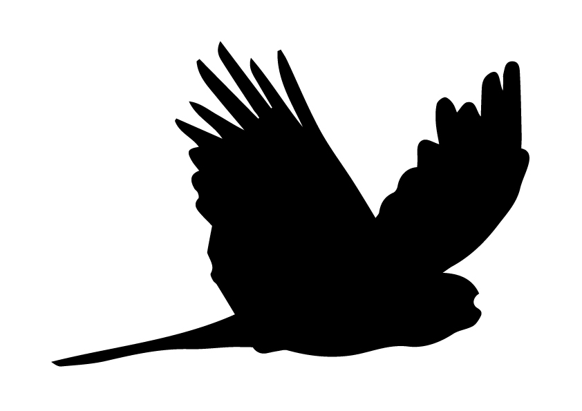Glossy Black Cockatoo clipart #8, Download drawings