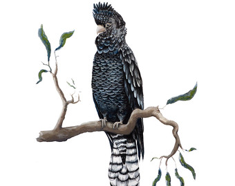 Glossy Black Cockatoo clipart #15, Download drawings
