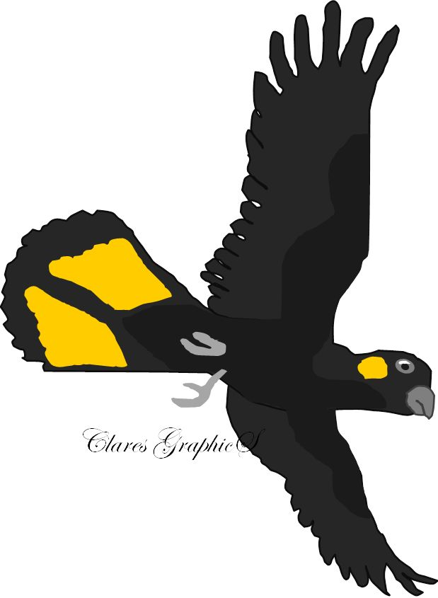 Glossy Black Cockatoo clipart #9, Download drawings
