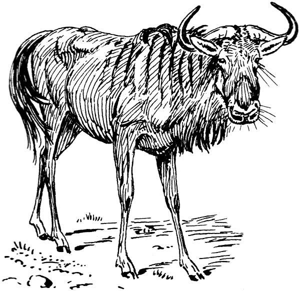 Gnu clipart #13, Download drawings