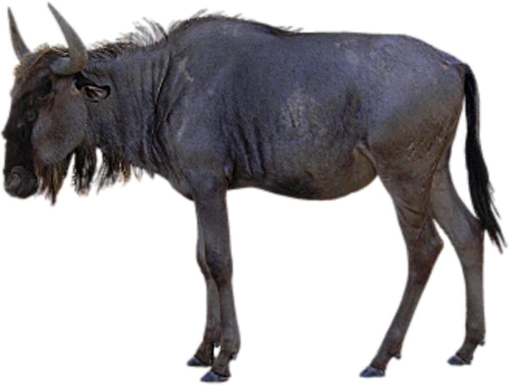 Gnu clipart #8, Download drawings