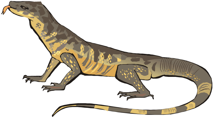 Monitor Lizard clipart #20, Download drawings