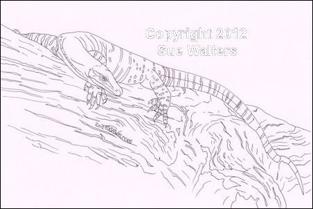 Goanna coloring #1, Download drawings