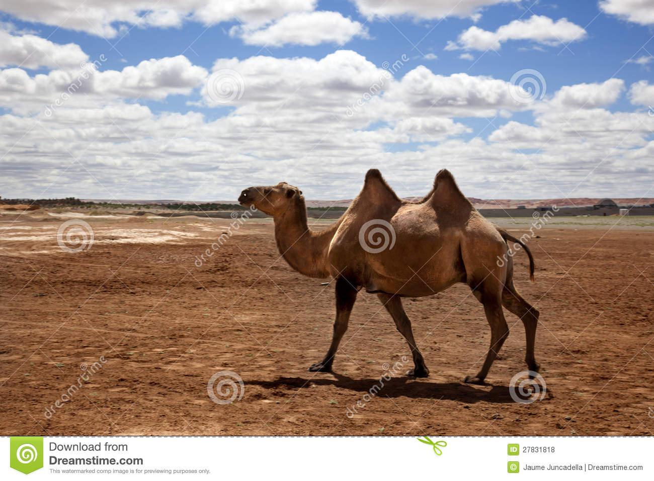Gobi Desert clipart #18, Download drawings
