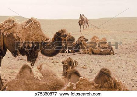 Gobi Desert clipart #14, Download drawings