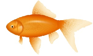 Gold Fish clipart #11, Download drawings