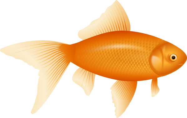 Gold Fish clipart #5, Download drawings
