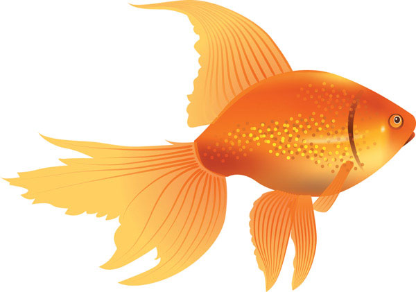 Gold Fish clipart #16, Download drawings