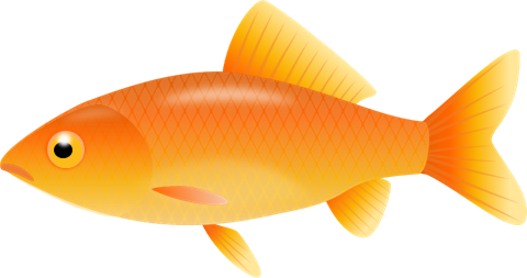Gold Fish clipart #3, Download drawings