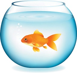 Gold Fish clipart #17, Download drawings