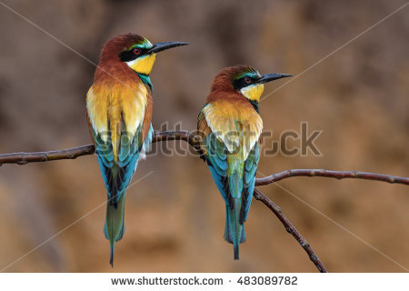 Golden Bee-eater clipart #20, Download drawings